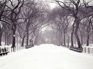 обои Зимняя аллея фото