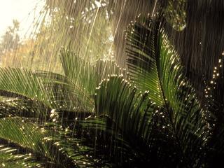обои Дождь в джунглях фото