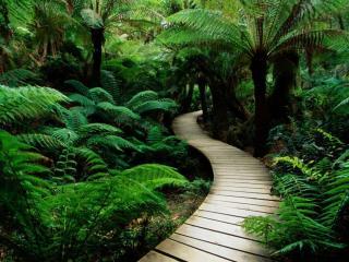 обои Дорожка в джунглях фото