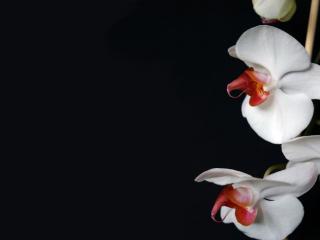 обои Цветы на черном фоне фото