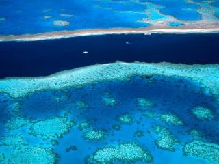 обои Коралловый риф фото