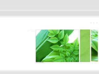 обои Растение в рамке фото