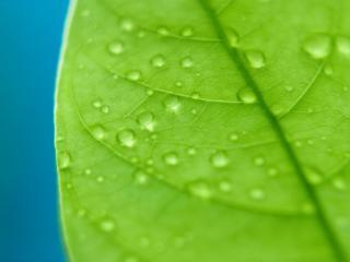 обои Мокрый листочек фото