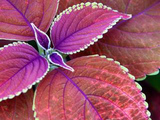 обои Ярко-красное растение фото