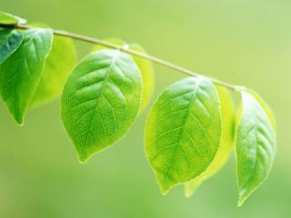 обои Зеленая ветвь фото