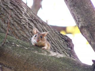 обои Мышонок на дереве фото