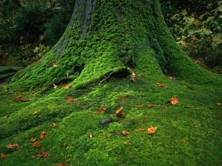 обои Мох на дереве фото