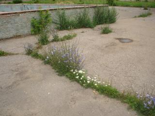 обои Старая дорога возле летнего бассейна фото
