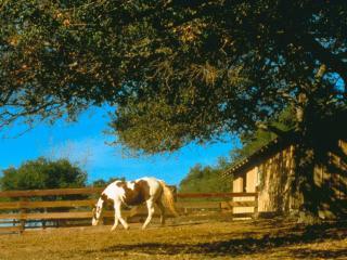 обои Лошадь во дворе фото