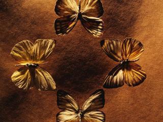 обои Четыре бабочки фото