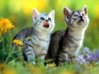 обои Котята смотрят вверх фото