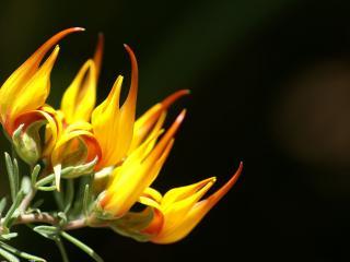 обои Желтый цветок фото