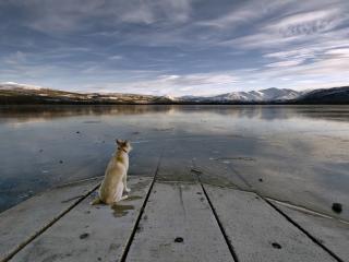 обои Одинокий пес на озере фото