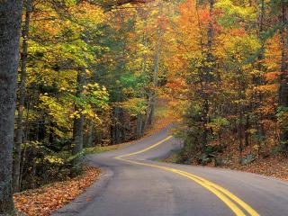 обои Autumn Colors Road фото