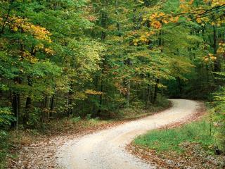 обои Country Road in Autumn, Nashville, Indiana фото
