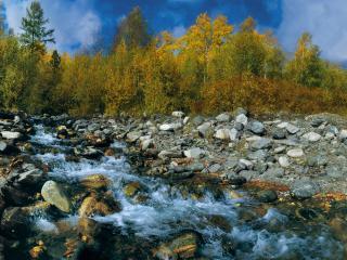 обои Ручей на фоне осеннего леса фото