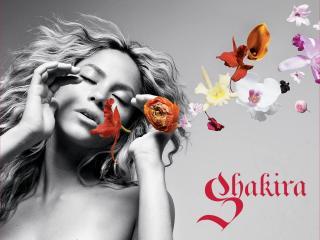 обои Красивая Певица Шакира фото
