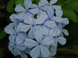 обои Бело-синее очарование фото