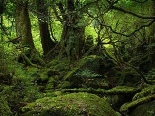 обои В чаще леса фото