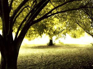 обои Дерево в лесу фото