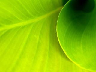 обои Зеленый омут фото