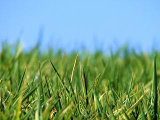 обои Зеленые плантации фото