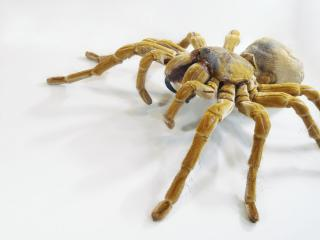 обои Жёлтый паук фото