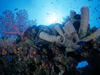 обои Кораллы с голубыми рыбками фото
