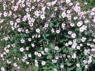 обои Розовые цветочки фото
