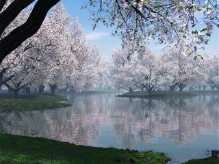 обои Белым зацвело у весеннего пруда фото
