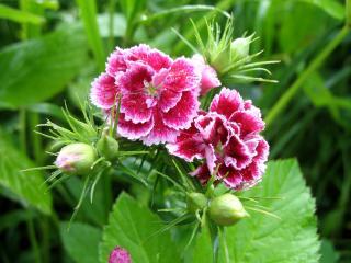 обои Изумительный цветок фото