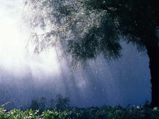 обои Дождь в лесу фото