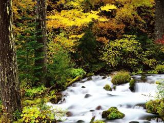 обои Журчание воды лесного осеннего ручья фото