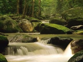 обои Лесной ручеек в летнем лесу, камни и мох фото