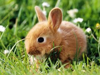 обои Маленький кролик фото