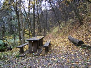 обои Столик и скамейки в лесу фото