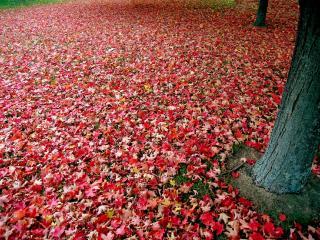 обои Ковер из осенней листвы фото