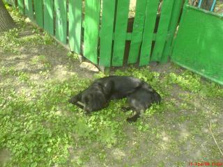 обои Мой пес грызет палку фото