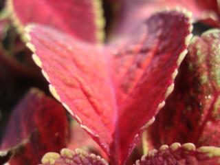 обои Очень красивое загадочное растение фото