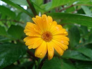 обои Жёлтый цветочек фото