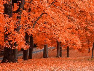 обои Оранжевая осень фото