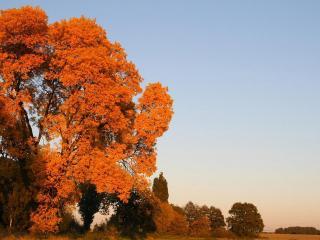 обои Ранняя осень фото