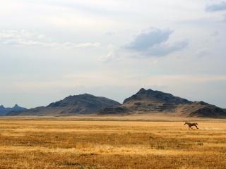 обои Светлая пустыня фото