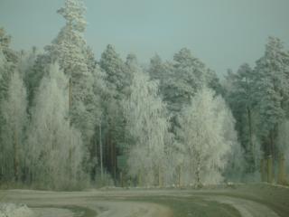 обои Зимняя сказка фото