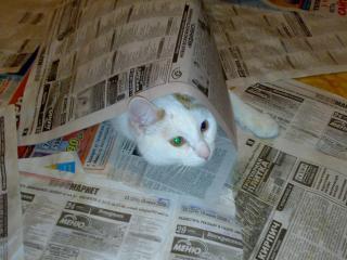 обои Кот спрятался фото