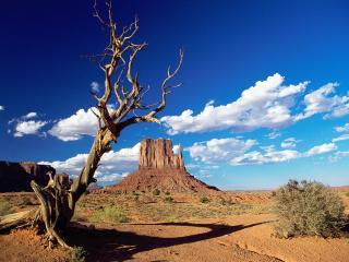 обои Пустыня в Аризоне фото