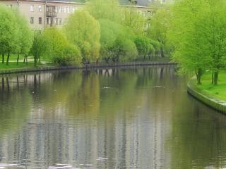обои Весенний пруд и деревья фото