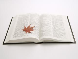 обои Книга и кленовый лист фото