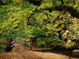 обои Лесной мостик фото