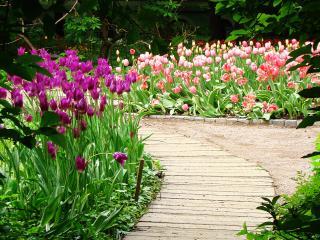 обои Дорожка в райском саду фото